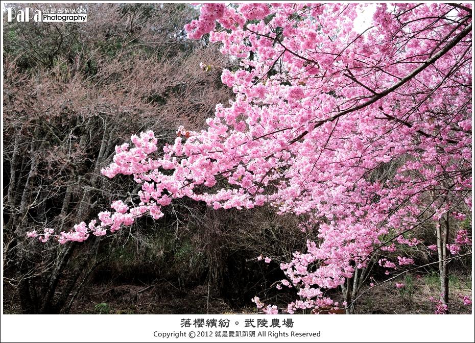 Wuling_0013