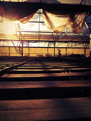 Dusk in the green house at the Farm Bee Yard