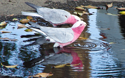 Reflections in Pink and Grey