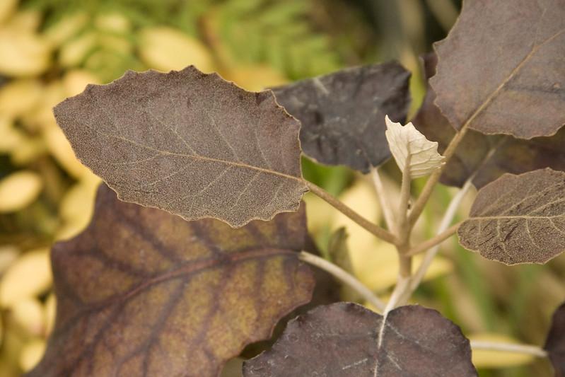 dark foliage