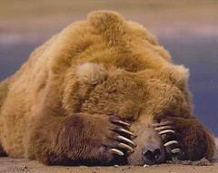 bearfacepalm