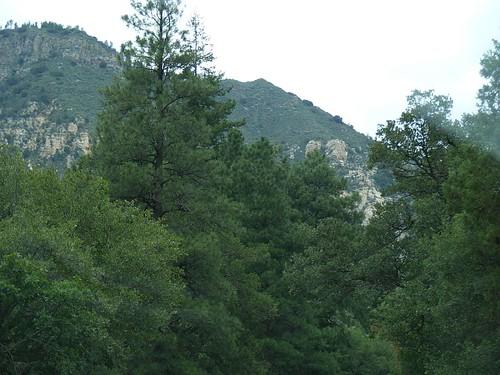 Oak Creek Canyon Mixed Forest