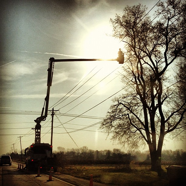 74/365+1 Overhead Work in #Chambana #silhouette   #tree #lux #sky #sun