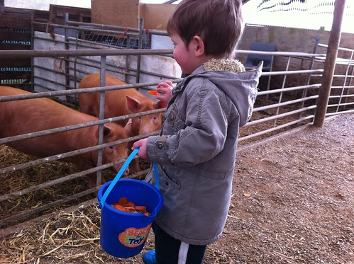 Owen offers the pig a piece of carrot, just the one