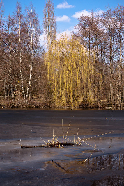 Pond in Winter (1/5)