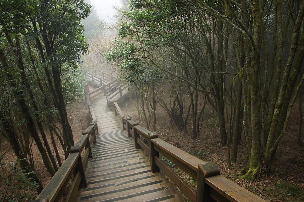 觀霧巨木步道-066
