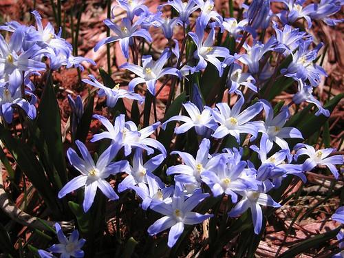 More Wood Hyacinth. by Leenechan