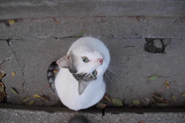 見上げる猫 2