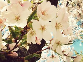 falling bloom