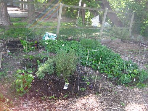 Garden Plot, April 29