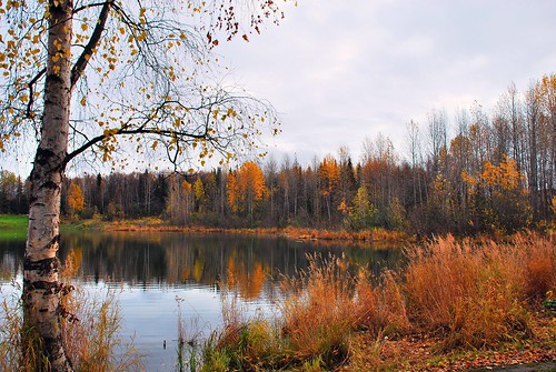 fall alaska day cloudy anchorage greenscene takucampbellpark