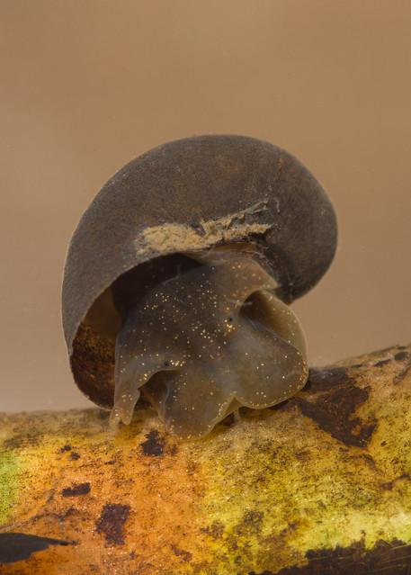 wadering snail edited