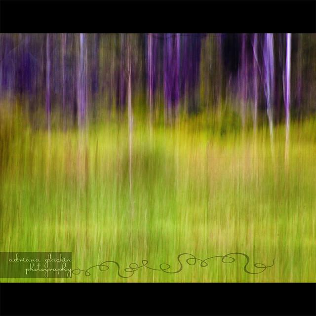 Mitchell Park ~ Impressions 1