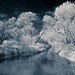 . ..infrared treatment.. . by oliver's | photography