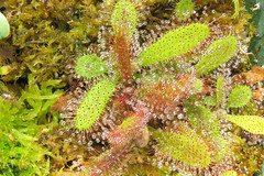 flower(0.0), fauna(0.0), carnivorous plant(1.0), coral reef(1.0), algae(1.0), coral(1.0), plant(1.0), marine biology(1.0), flora(1.0), moss(1.0),