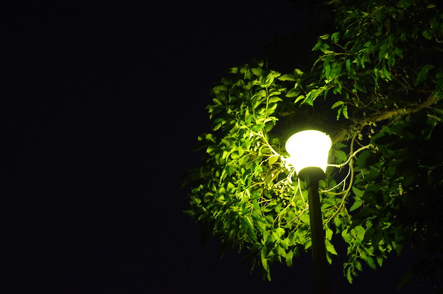 Night Light
