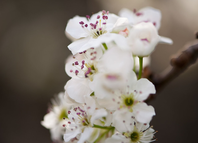 014 flowers