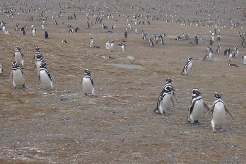Punta Arenas-114