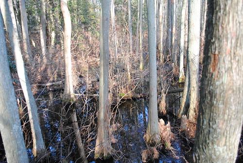 statepark park forest woods delaware laurelde trappondstatepark sussexcountyde