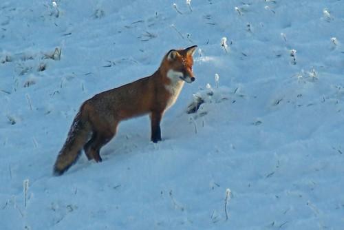 fox 11 02 12 2