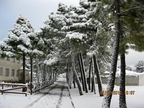Calle al parque
