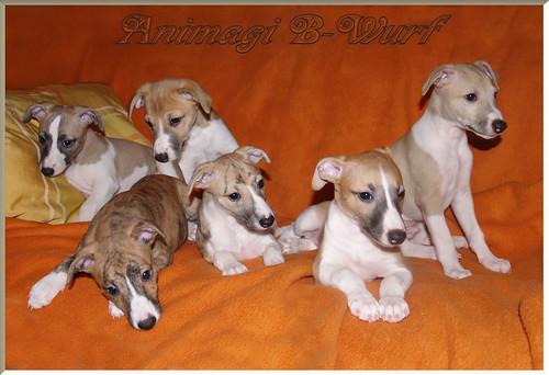 AnimagiB-Wurf8.10.2010