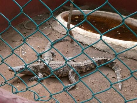 TalkingCrocodiles