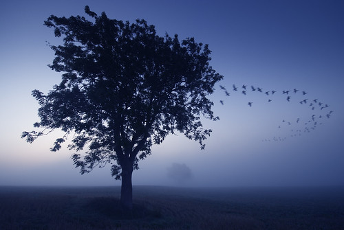 "blue autumn mist tree field birds misty fog dawn geese formation mcp hss ""great addington"""