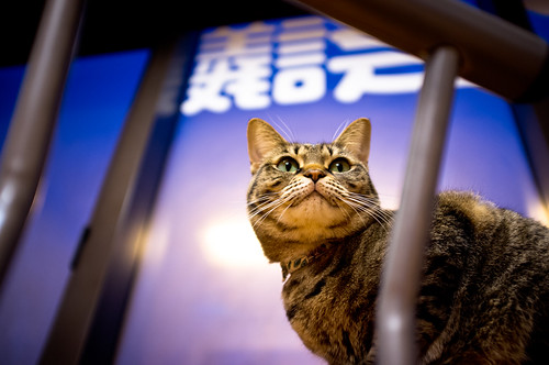 "the hill between nose and mouth (at ""Cats' conference"", Kyoto)"