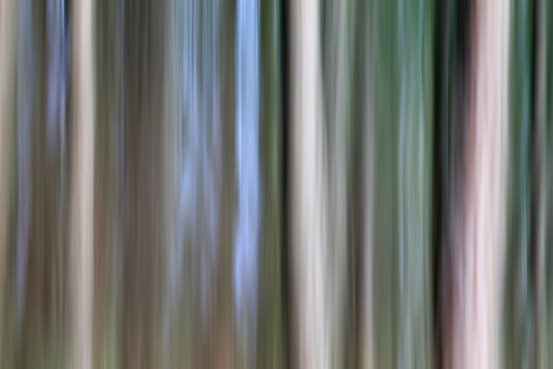 abstract blur nature vertical forest movement colours bc vancouverisland sidney