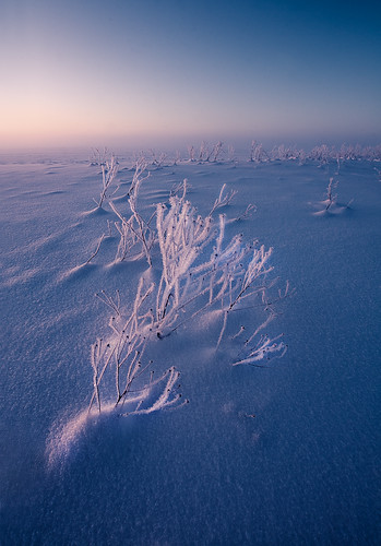 blue winter light sky white mist snow cold color detail ice nature colors field grass vertical fog clouds landscape outdoors photography evening frozen colorful europe soft exposure frost estonia day view outdoor january atmosphere nopeople baltic fresh clear land nordic cristal andrei reinol