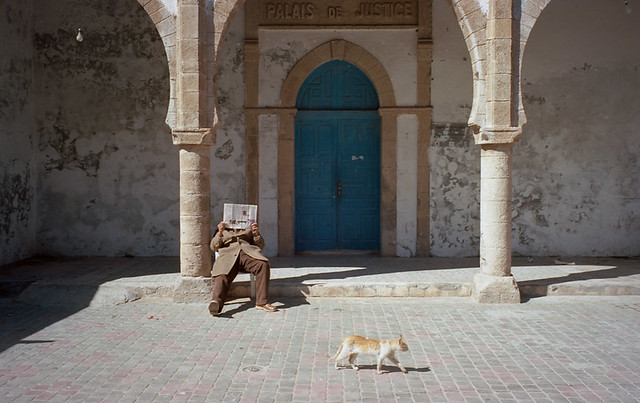 40 Fierce Photos Featuring Felines - Cat Street Photography - Une chat marocain