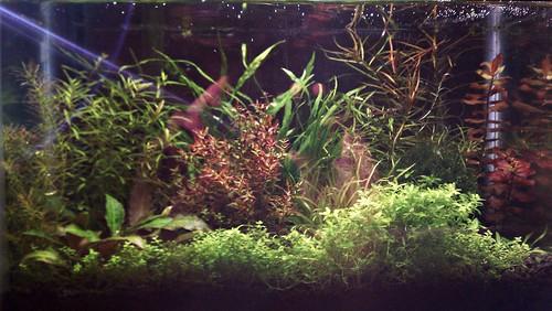 Judi's 2.5G Aquarium