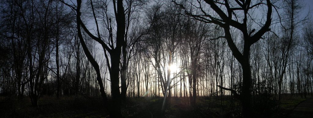 Sun through trees (Panorama) Saunderton Circular via West Wycombe