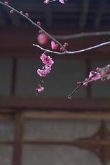 不老園 '12/03/06