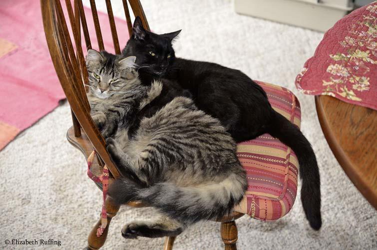 Cuddling kitties by Elizabeth Ruffing
