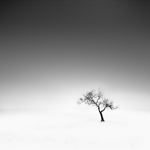 ODT Lonely Tree