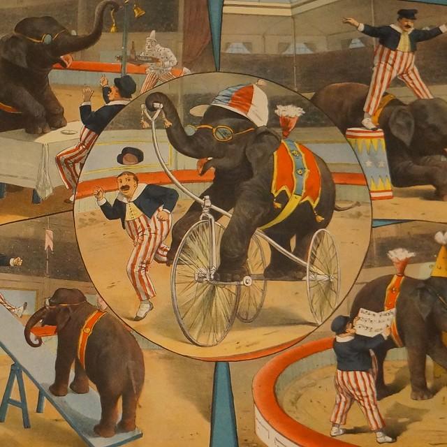 Performing Elephants