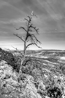 Tree Leaning over Chama River Valley, NM