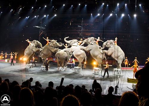 Elephant array