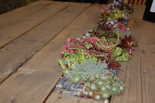 Sunset's dining table with inlay for succulents