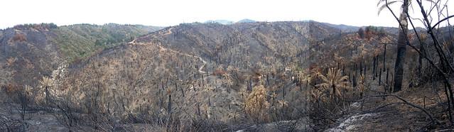 panorama incendio palmar El Salto