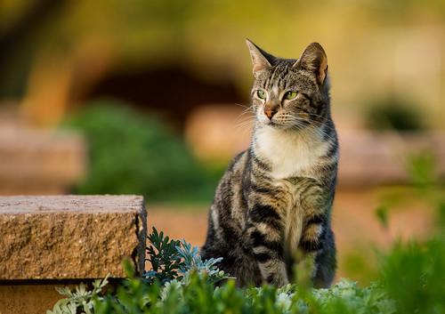 cat 4_1