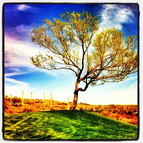 arizona tree nature mobile clouds golf square unitedstates lofi squareformat iphone desertmountain iphoneography instagramapp xproii