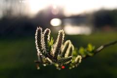 Spring at Singleton Lake
