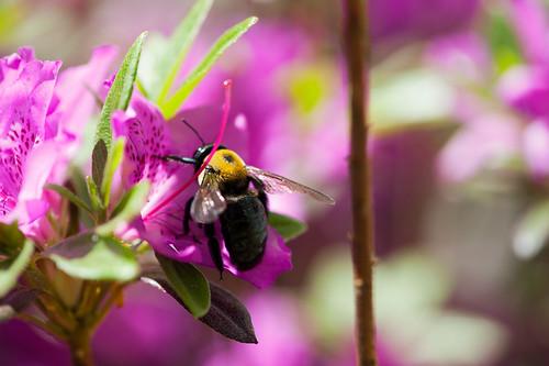 001 bee