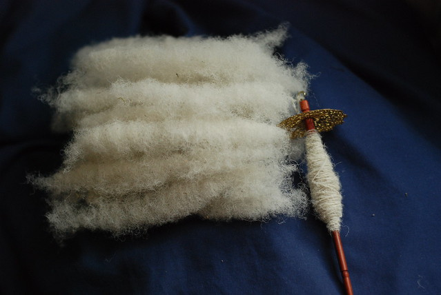 Rolags of Wiltshire Horn hair sheep wool being spun on a drop spindle