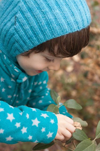 Buscando frutos para pasar el  invierno