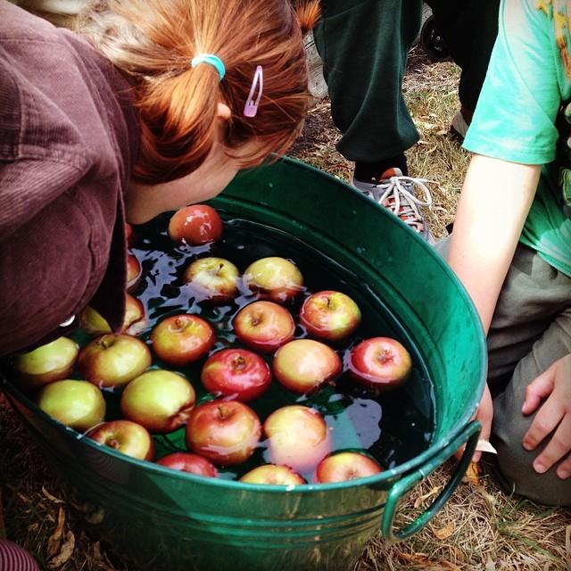 Apple bobbing #bigowlet #coop #autumn #equinox