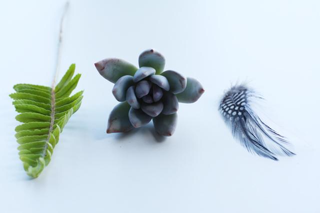 succulent boutonniere materials